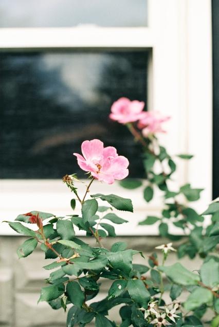 Homesteading_Lifestyle_Blog-2